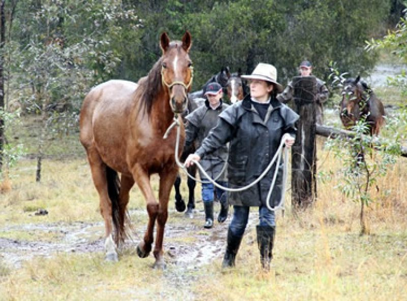horse rescue, horse rehabilitation, horse education