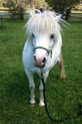 horse rescue, horse rehabilitation, horse education