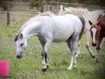 fleur - horse rescue, horse rehabilitation, horse education