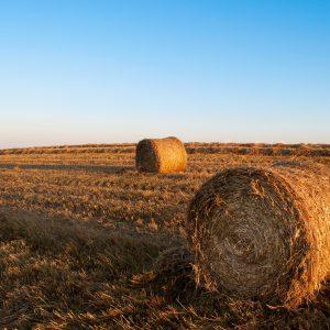 Buy A Bale of hay