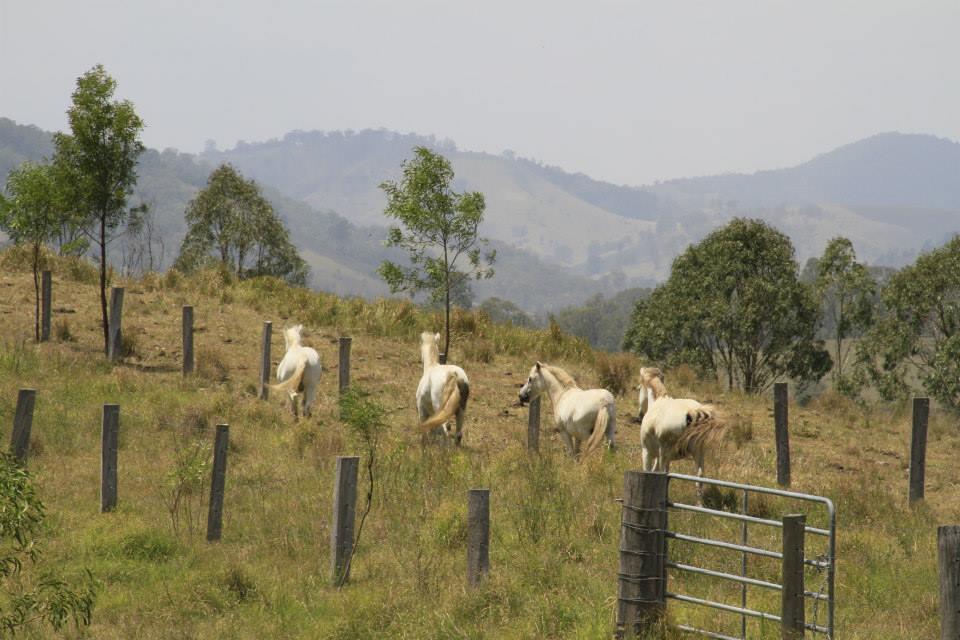 Mount George Ponies