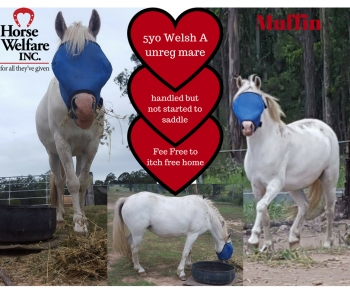 Muffins needs sanctuary - itch free home - horse rescue and rehabilitaiton