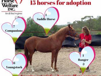 Horse adoptions needed, horse rescue and rehabilitation