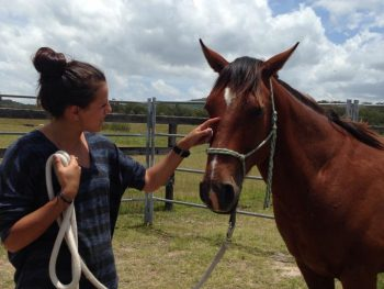 Scout Has a Home - horse adoption - horse rescue