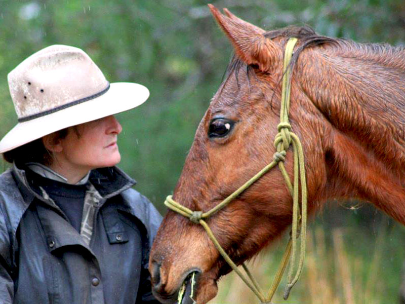 Horse-welfare-horse-rescue-featured