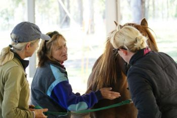 Equine Intuition Business Launch - Equine Therapy